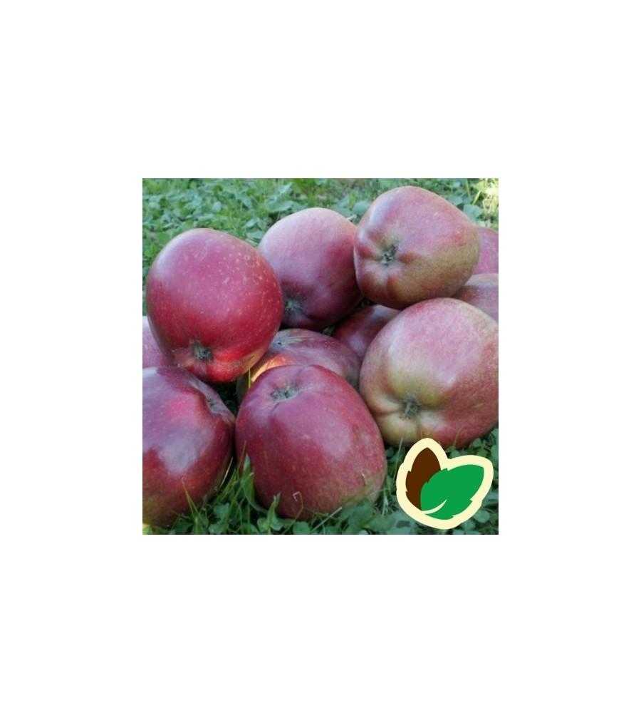 Æbletræ Skovfoged