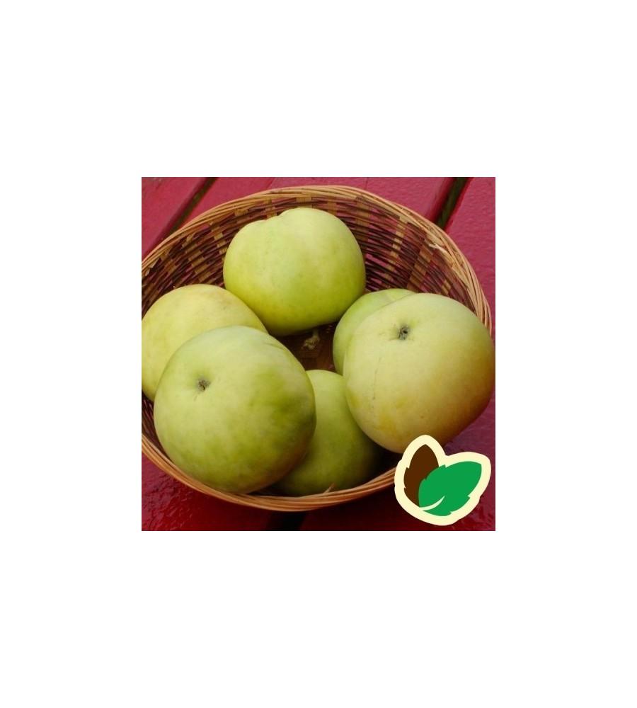 Æbletræ Transparente Blanche