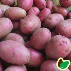 Cerise Læggekartofler – 2 Kg.