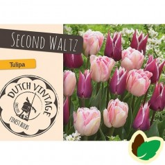 Tulipanløg - Blanding Second Waltz - 15 Løg