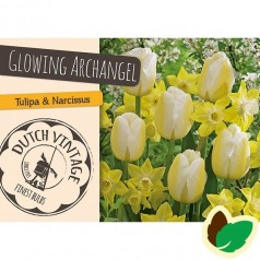 Tulipanløg og Påskeliljeløg - Blanding Glowing Archangel - 12 Løg