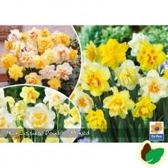 Påskeliljeløg Dobbelt Mix - Narcissus / 50 Løg