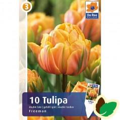 Tulipanløg Freeman / Dobbet Tulipan - 10 Løg