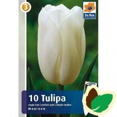 Tulipanløg Maureen / Tulipan - 10 Løg