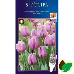 Tulipanløg Violet Beauty - Single Tulipan / 10 Løg