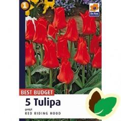 Tulipanløg Red Riding Hood - Gregii Tulipan / 5 Løg