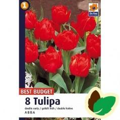 Tulipanløg Abba / Dobbelt Tulipan - 10 Løg