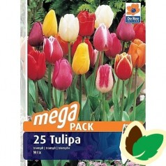 Tulipanløg Triumph Mix / MEGAPACK - 25 Løg