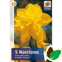 Påskeliljeløg Golden Ducat - Narcissus 5 Løg