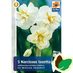 Pinseliljeløg Sir Winston Churchill - Narcissus 5 Løg