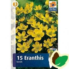 Erantis - Eranthis Hyemalis - 15 løg