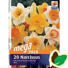Påskeliljeløg Storblomstret MIX - Narcissus / 20 Løg