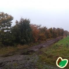 Læhegn til fugtige jorde (Mellem) 3 rækker a. 30 meter.