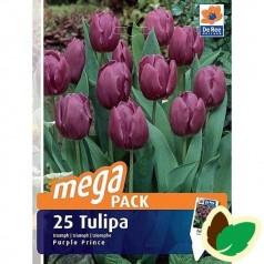 Tulipanløg Purple Prince / MEGAPACK - 25 Løg