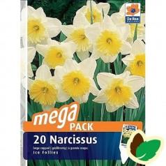 Påskeliljeløg Ice Follies - Storblomstret Narcissus / 20 Løg Megapack