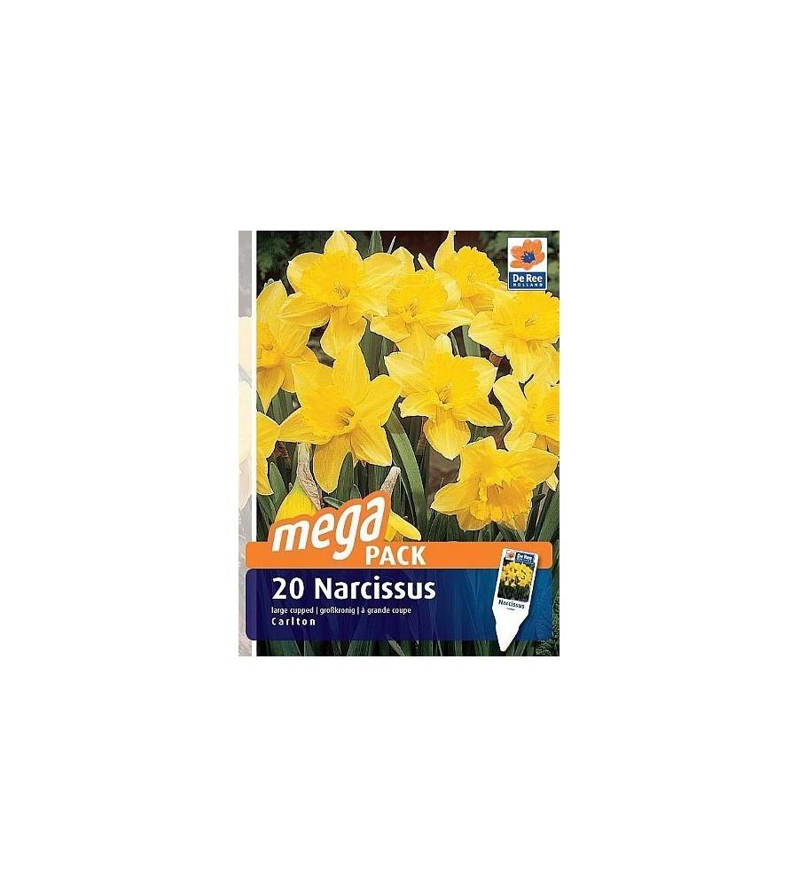 Påskeliljeløg Carlton - Narcissus / 20 Løg Megapack