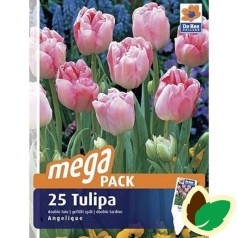Tulipanløg Angelique / Dobbelt Tulipan - 25 Løg Megapack