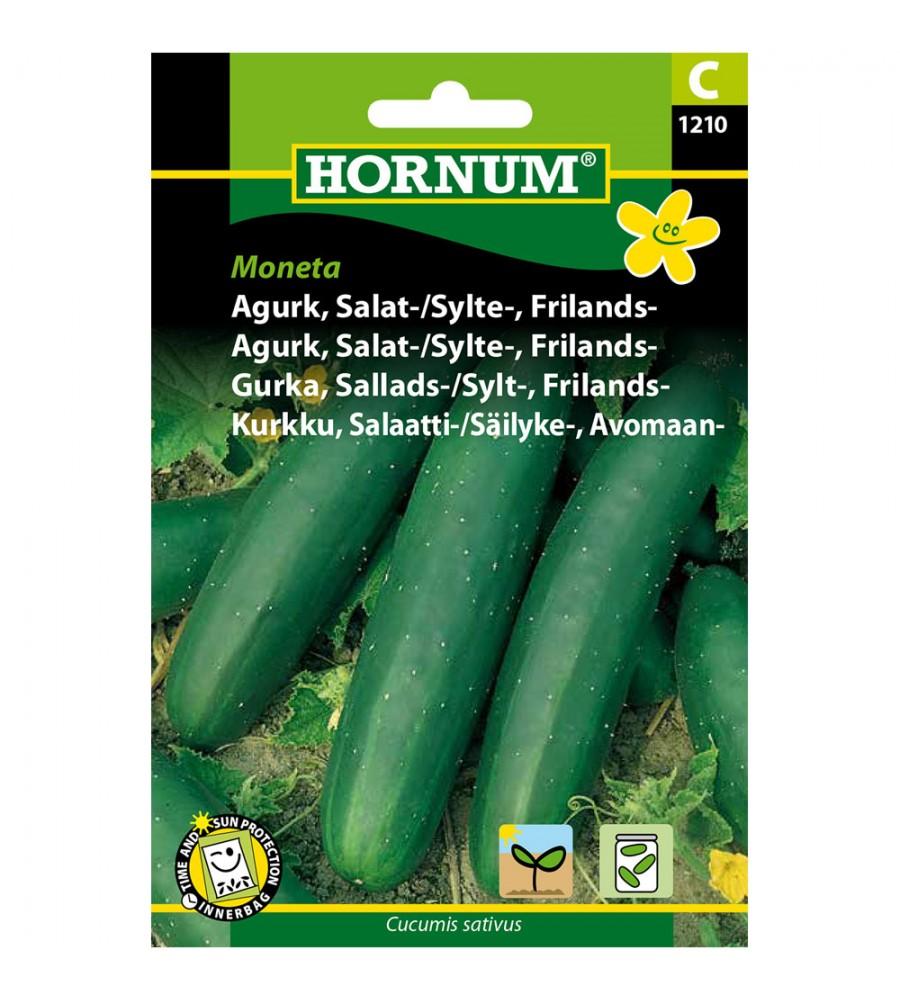 Agurkefrø Moneta - Salat/Sylteagurk - Frilandsagurk