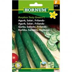 Agurkefrø Burpless Tasty Green F1 - Salatagurk - Frilandsagurk