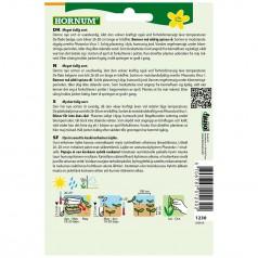 Stangbønne Frø Algarve