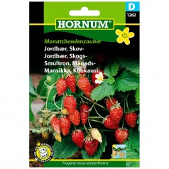 Jordbær - Skovjordbær - Monatsbowlenzauber - frø