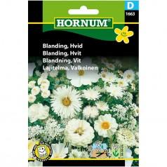 Blomsterblanding Frø - Hvid