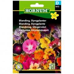 Blomsterblanding Frø - Slyngplanter