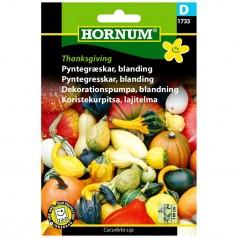 Pyntegræskar Frø - Thanksgiving Blanding