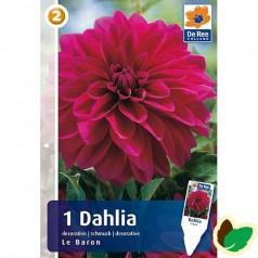 Dahlia Decorative Le Baron / Georgin