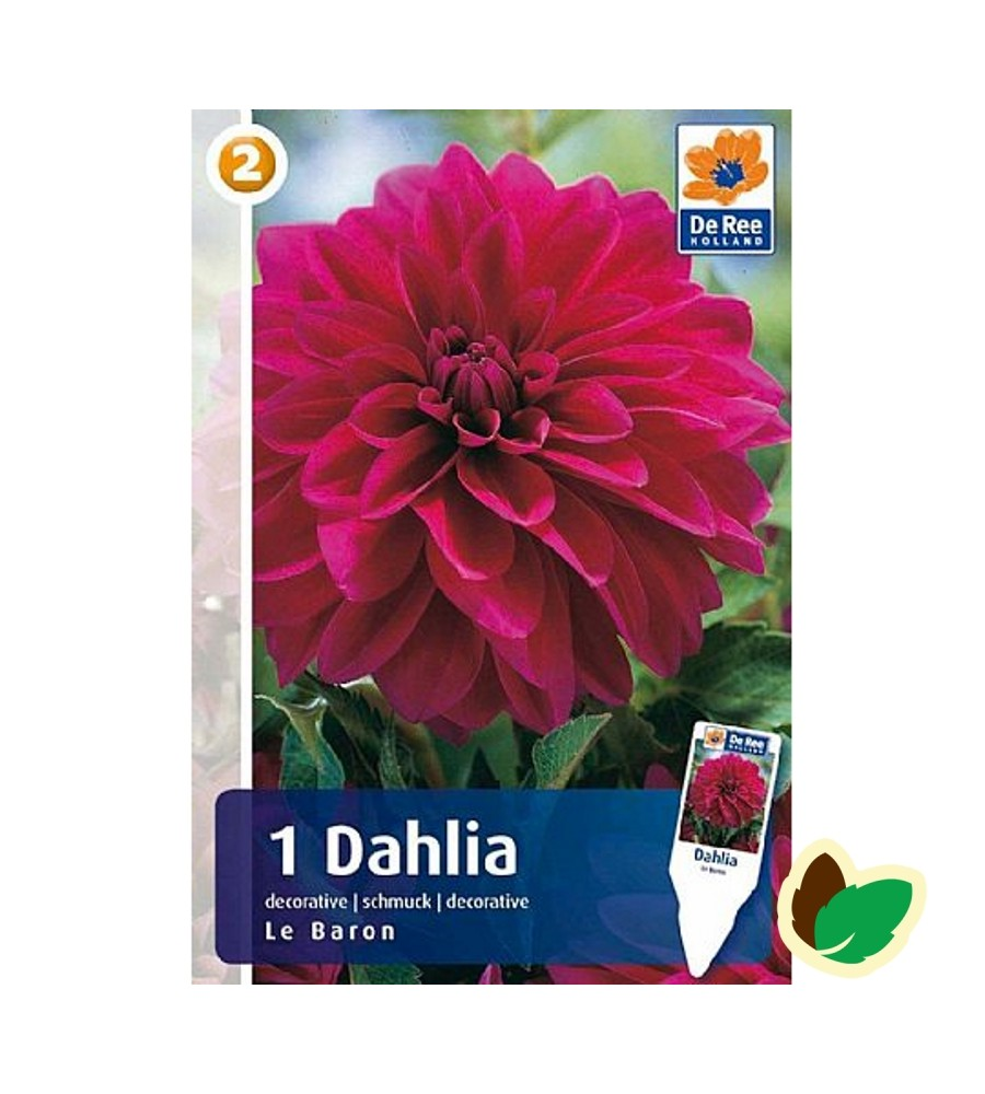 Dahlia Decorative Le Baron / Georgin