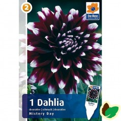 Dahlia Decorative Mistery Day / Georgin