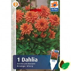 Dahlia Dinnerplate Decorative Orange Glory / Georgin