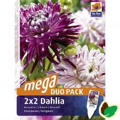 Dahlia Megapack Vancouver & Avignon - Georgin - 4 stk.