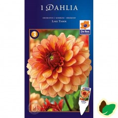 Dahlia Decorative Lake Tahoe - Georgin