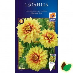 Dahlia Decorative Dazzling Sun - Georgin