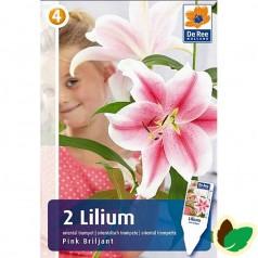 Trælilje Lilium Pink Brilliant - 2 Løg