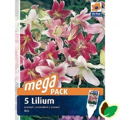 Liljer Oriental Mix - 5 Løg Megapack