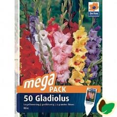 Gladiolus Storblomstret Mix - 50 Løg Megapack