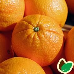 Appelsiner - appelsintræ