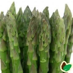 10 stk. Asparges planter 'Gijnlim' barrodsplanter