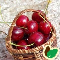 Kirsebærtræ Van
