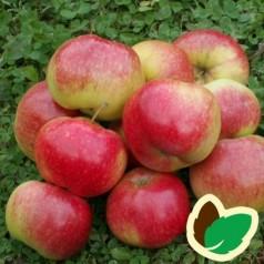 Æbletræ Katinka