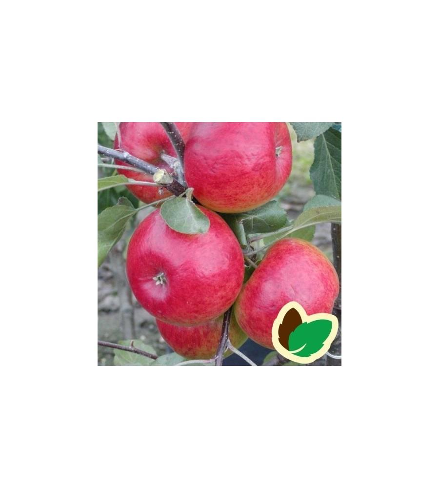 Æbletræ Redfree