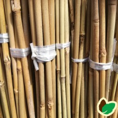 Bambuspinde 120 cm.