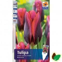 Tulipanløg Muvota / Enkelt Tulipan - 10 Løg