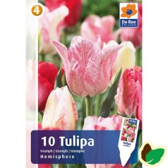 Tulipanløg Hemisphere / Triumph Tulipan - 10 Løg