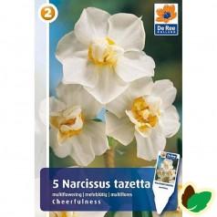 Pinseliljeløg Cheerfullness - Narcissus tazetta / 5 Løg