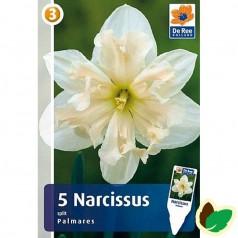 Påskeliljeløg Palmares - Narcissus / 5 Løg
