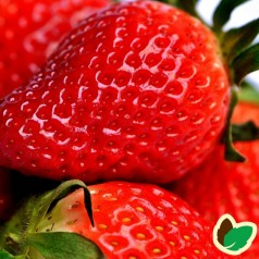Jordbærplanter Sonata