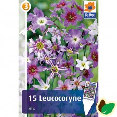 Leucocoryne Mix - Blandede farver - 15 løg